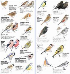 Identify garden birds Source by Animals Of The World, Animals And Pets, Bird Identification, Wild Creatures, Bird Pictures, Zoology, Colorful Birds, Wild Birds, Bird Watching