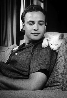 Explore the best Marlon Brando quotes here at OpenQuotes. Quotations, aphorisms and citations by Marlon Brando Marlon Brando, Crazy Cat Lady, Crazy Cats, Celebrities With Cats, Celebs, Don Corleone, Men With Cats, Animal Gato, Happy Images