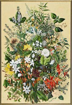 New Zealand Native Flowers