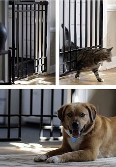 Custom iron gates that keep dog out of cat bowls/litter! #PetGate #catifying #cats #dogs.