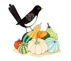 Récolte d'impression citrouille Blackbird et Magpie par joojoo