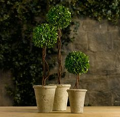 Preserved Boxwood Tree Topiaries - Bring life to your space, as well as a the charm of outdoors, with these Boxwood Tree Topiaries.