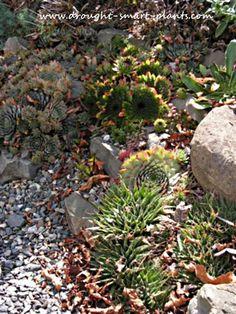 Rock Gardens - crevice gardens, cliffs and screes