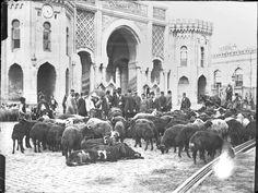 Bayram öncesi Beyazıt Meydanı'nda kurbanlık satışı, İstanbul, 1913