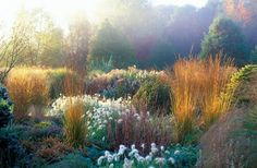 Grasses, perennials - I never consider ornamental grasses, but these look fantastic