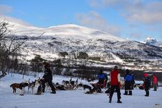 Listos para la travesía. Trineo de perros. Laponia noruega