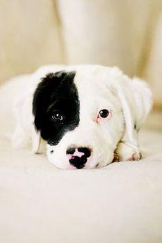 Cutie <3 www.bingohall.com