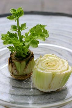 Regrow celery by putting the stalk (with 2 inches left) in a dish of water. Once it grows leaves, you can plant it. Use only the outside stalks and it'll continue to grow from the inside.