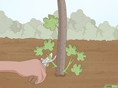 How to Prune a Fig Tree: 11 Steps (with Pictures) - wikiHow Pomegranate Tree Care, Growing Fig Trees, Growing Herbs, Fig Fruit Tree, Baie De San Francisco, Tree Pruning, Fall Fruits, Plantation, Gardens