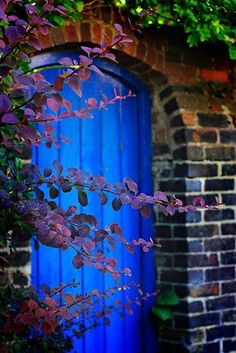 Smoke tree. Blue door. Red brick. Colors!