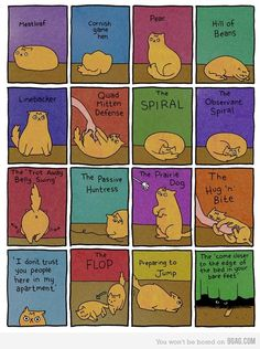 Cat positions :D ~ Yep, I see Cupcake in many of these positions ALL the time!