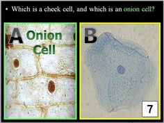 parts identifying cells and questions on how cells make systems see ...