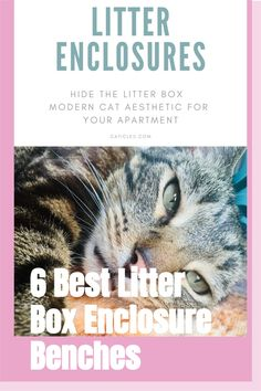 Want to hide your cat's litter box? These are the best litter enclosures! Cats don't like covers on their boxes, but these enclosures are airy and spacious. Cats prefer open boxes, but if you need to hide it these are the best. You need an enclosure with proper ventilation. And these ones will match your home aesthetic. Check out the guide today! Modern Cat Furniture, Pet Furniture, Best Litter Box, Litter Box Enclosure, Cat Hacks, Cat Sitter, Cat Aesthetic, Animal Projects, Cat Crafts