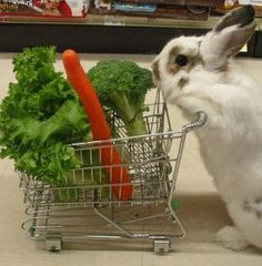 Cómo cuidar un conejo doméstico - Alimentación