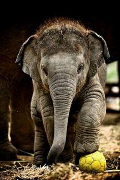 So #cute #adorable #babyelephant