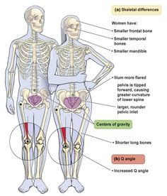 Anatomy Difference Between Male And Female Human Skeleton Male Vs Female Human Anatomy Diagram