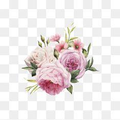 HD Rosa vector aquarela Pintado à mão, Rosa, Cor - De - Rosa, Pintados à MãoPNG e Vector