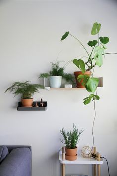 Plant wall in the living room.