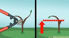 Image titled Prune Plum Trees Step 2