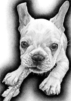 Adorable French Bulldog pen and ink drawing. Custom illustrations for your doggie. Great gift idea for next big birthday!