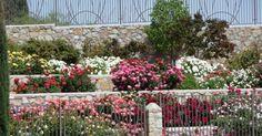 El Paso Municipal Rose Garden | El Paso County Master Gardeners