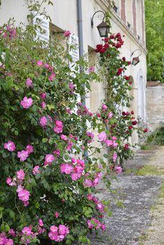 Ospite e casa La maison e l'atelier rose in giardino