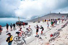 Pro Cycling, Racing, Tours, Running, Auto Racing