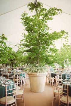 Indoor tree wedding decorations google search wedding ideas seextrascreen 4g junglespirit Choice Image