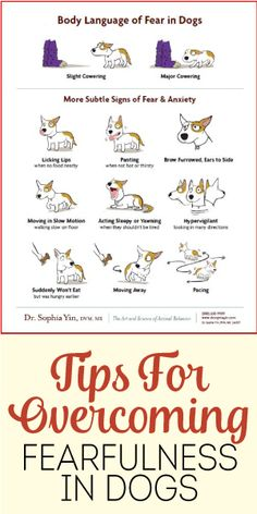 Tips For Overcoming Fearfulness in Dogs