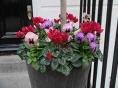 Doddington Place Gardens - » Winter Colour in Window Boxes - Faversham, Sittingbourne, Kent