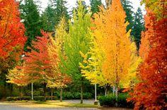 Parque con arboles caducifolios (Hoja caduca) en el otoño. En algun lugar de America.