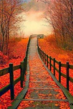 Autumn Path. Where is it going and where has it been?