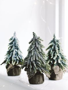 Miniature Frosted Christmas Tree | Cox & Cox. Got 5 of these, lovely!