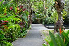 Bali | Tropical Garden path. Heliconia, Cordyline, Anthurium, Plumeria.