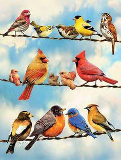 Reunión de pájaros en las cuerdas. 500 piezas de puzle de Cobble Hill. Encuéntralo en Puzzlemania
