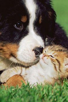 Precious moment /.   (via Pin by º•☆ Xaron White ☆•° on A GARDEN OF MEMORIES✿⊱╮   Pinterest)