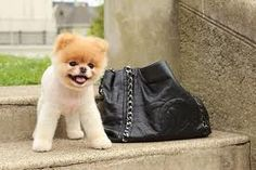 Someone is having a play date with Chanel. #chanel #fofura #playdate #adorobobags #aluguechanel