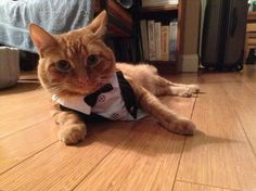 cat in tuxedo - Seriously?  I am off duty!