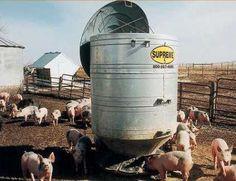 Hog Feeder