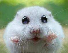 Omg Ultra Cute Lil Hamster !!