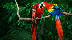 Macaws at a wildlife preserve north of Cancun