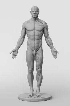 266 best male figure images sculptures drawings sculpture art