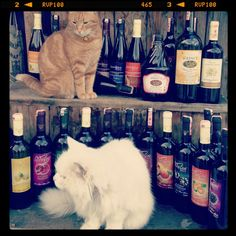 Cats and Wines