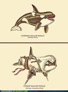 Expert Killer Whale