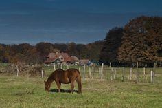 Herbststimmung in der Wedemark, Niedersachsen (Lower Saxony), Northern Germany. DieWedemark is a historical landscape description for the area that is situated approx. 20 km north of Hanover. It ranks 3rd on average per capita income in the state of Niedersachsen. Wedemark's neighbors are the municipalities Burgwedel, Isernhagen, Langenhagen, Garbsen, Neustadt am Rübenberge, Lindwedel, and Wietze.