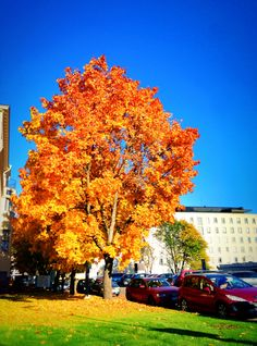 #Beautiful #autumn day in #Helsinki #Finland