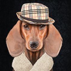 Portrait of stylish Mr dachshund with hat on