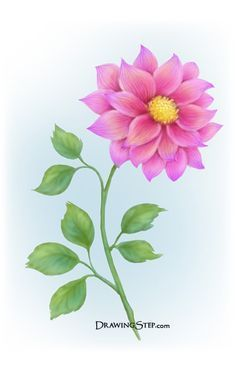 Easy Color Drawings Google Search Beautiful Flower Drawings Flower Drawing Flower Drawing Images