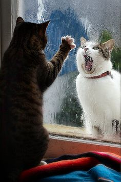 ~OPEN THE WINDOW let me in....