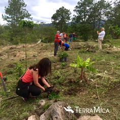 TerraMica #volunteers planting #trees, using #agriculture to create #sustainability for a children's home in #Honduras #compassion